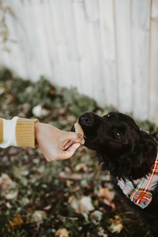 Giving dog treat to dog